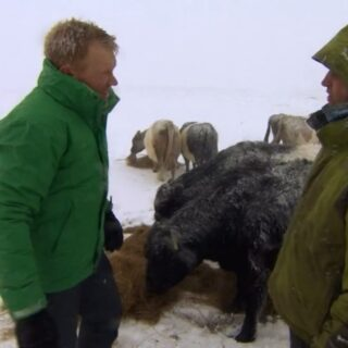 An icy blast from the past on @bbccountryfile tonight at 7pm. Moving cows over the tops to Malham Tarn but it might show highlight of @adamhenson_ & Neil digging a gate out. Back then the Cotswolds were the land of milk and honey and Adam had never seen owt like it! Think he's had more than us this year. Filmed March 2015 #oldbutgold #winter #tbt #snow #countryfile #farm #farmlife #malham #yorkshiredales #blastfromthepast #farming #bbc