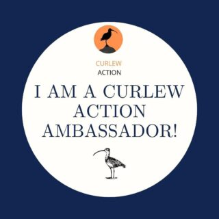 So chuffed to be an ambassador for @curlewaction. I absolutely love this bird and I know loads of others do too. It's iconic in the @yorkshiredales and I don't want to imagine a landscape without it. Curlews find themselves in a tricky situation and need our help. Their decline has been fairly recent and absolutely devastating but we can turn things around with positive action. I'll be posting about Curlews in the coming weeks and will hopefully show them flying over our meadows as Spring bursts back into life. Please follow @curlewaction too - lots of orgs have come together with the backing of @defrauk to make things happen. Credit also to the fantastic @marycolwell1 who has been appointed as Chair. Her book Curlew Moon is very inspiring #curlew #nature #wader #wadingbirds #wildlife #bto #rspb #farm #farmlife