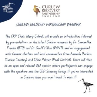 For people interested in Curlew Recovery - there's a webinar tonight 7-8:30pm, speakers as above. There are things we can do, these conversations are important. All welcome! You need to register for it - I'll put the link in my bio, organised by Curlew Recovery Partnership #worldcurlewday #curlew #wadingbirds #nature #birds