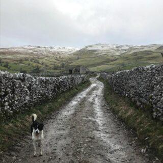 White on the tops this morning #snow #spring #farmlife #yorkshiredales #sheepdog #dog #workingdog #bordercollie #bordercolliesofinstagram